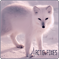 Foxes: Arctic (Animals)