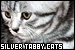 Cats: Silver Tabby