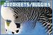Parakeets (Budgerigars/Budgies)