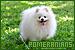 Dogs: Pomeranian