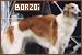 Dogs: Borzoi
