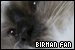 Cats: Birman