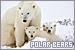 Bears: Polar
